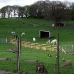 imagine articol Şase paşi pentru o fermă ecologică