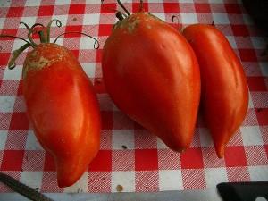 imagine articol - Legumele tratate cu calciu și magneziu nu sunt afectate de secetă și dăunatori