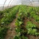 curs agricultura ecologica